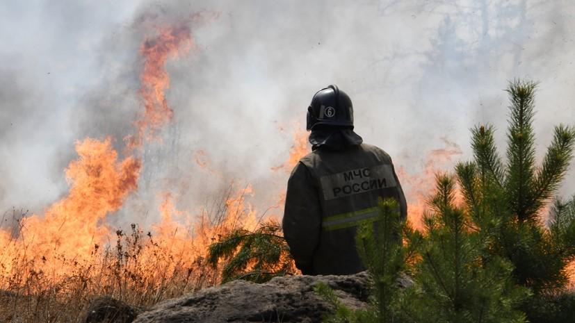 В России за сутки ликвидировали 51 лесной пожар