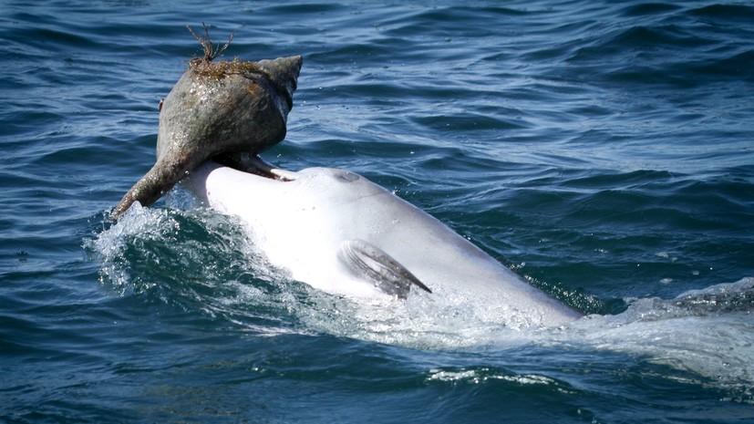 Обед навынос: учёные обнаружили у дельфинов способность к социальному обучению