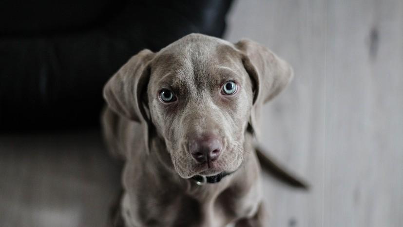 Кинолог дал рекомендации владельцам собак на случай жаркой погоды