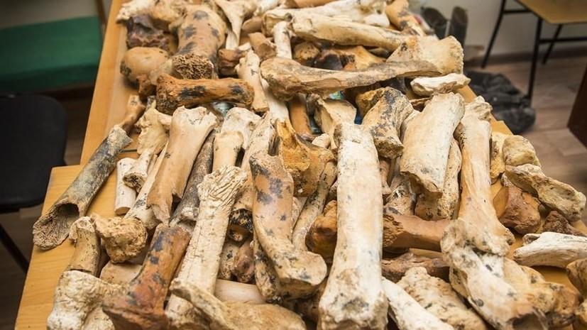 В пещере Таврида нашли останки древнего двурогого носорога