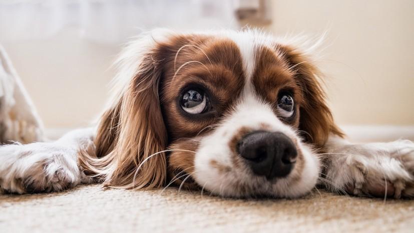 Кинолог призвал к ответственности при заведении собаки