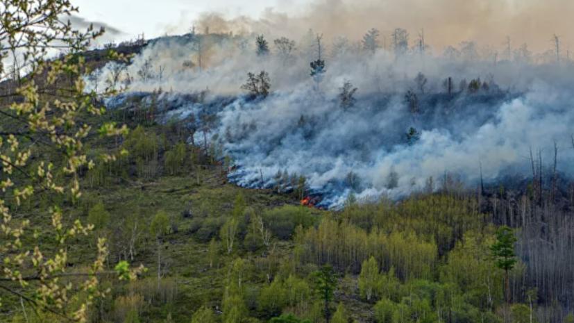 Площадь пожаров в Красноярском крае выросла на треть за сутки