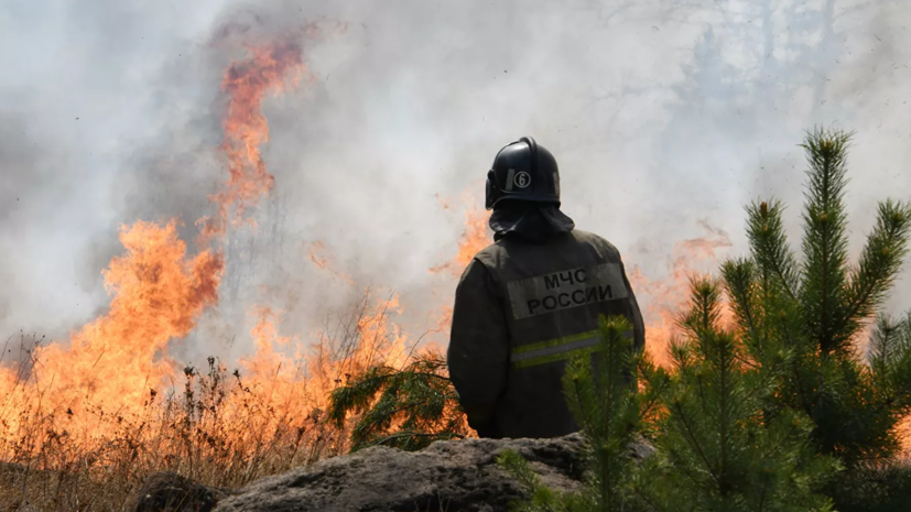 В Рослесхозе назвали сумму ущерба от лесных пожаров в 2019 году