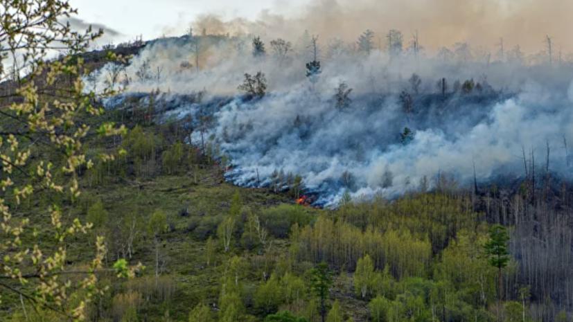В России за сутки потушили 78 лесных пожаров