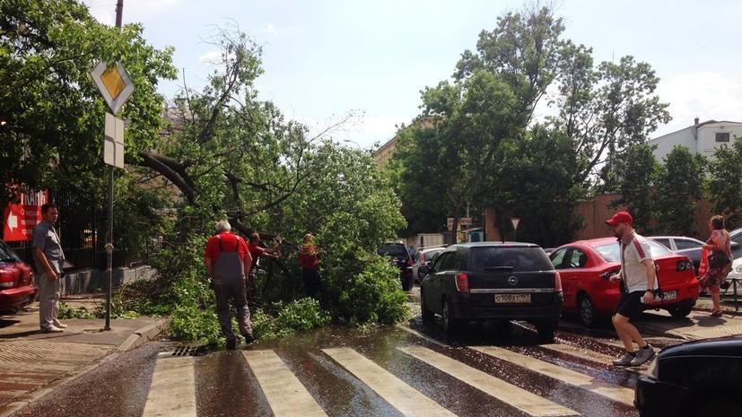 В Москве и Подмосковье из-за ветра повалено 130 деревьев