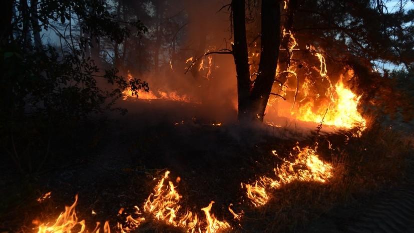 На Украине рассказали о ситуации с лесными пожарами в Луганской области