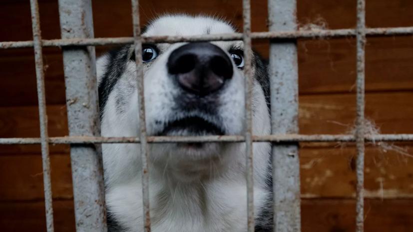 Эксперт рассказал о работе приютов для животных в Москве