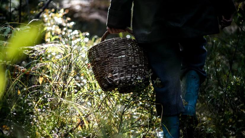Грибники нашли скелет в подмосковном лесу