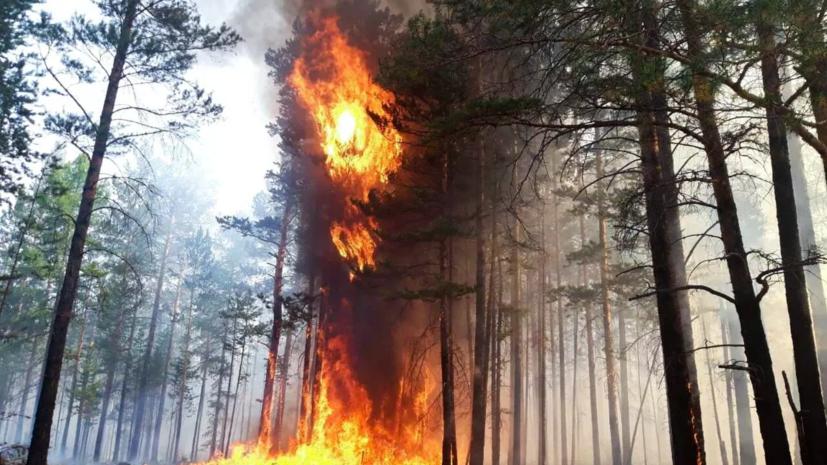 Вильфанд рассказал о самых пожароопасных регионах России
