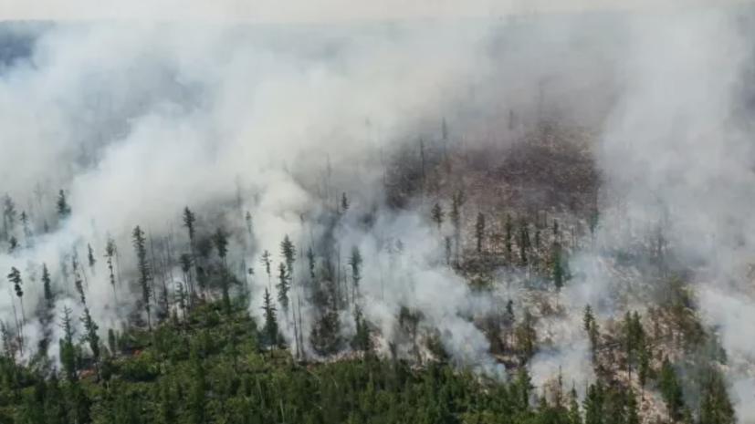 Лесопожарные службы потушили в России 134 природных пожара за сутки