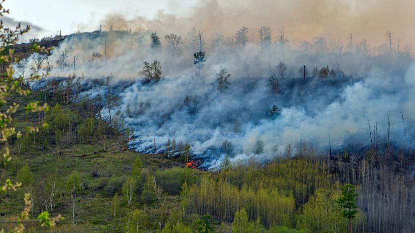 Площадь пожара в заповеднике в Башкирии превысила 208 гектаров