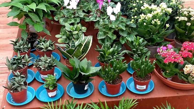 В Волгограде возобновил работу Ботанический сад
