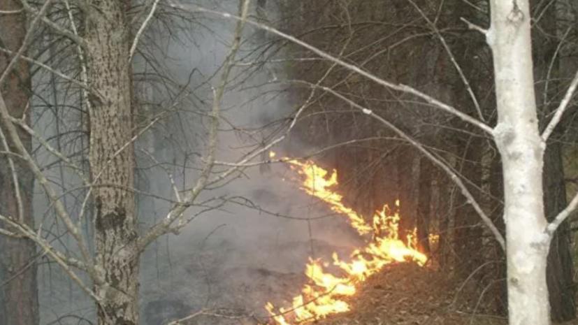 На Урале в заповеднике «Денежкин Камень» площадь лесного пожара увеличилась до 19 га