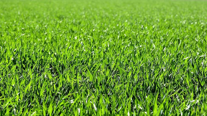 Надпись «Лето в Подмосковье» появилась на поле в Ступине