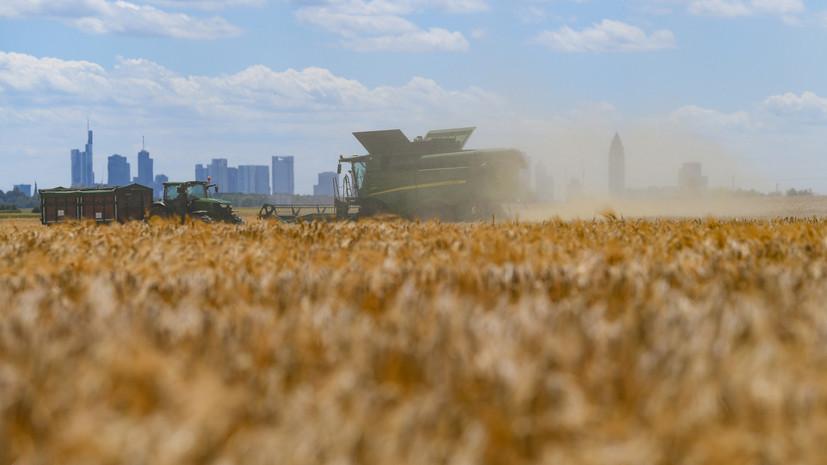 Учёные заявили о губительных последствиях засухи в пяти регионах России