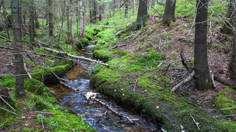 В Удмуртии рассказали о восстановлении лесов