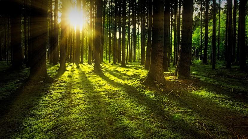 Эксперт дал рекомендации по безопасному посещению леса