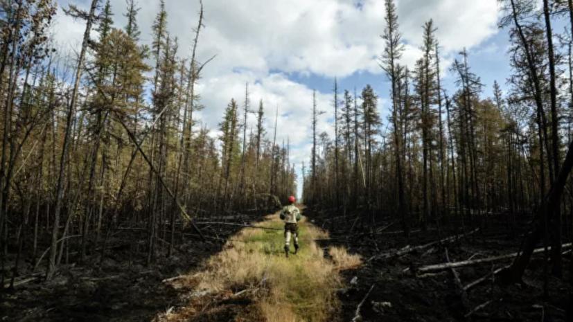 В России потушили 65 природных пожаров за сутки