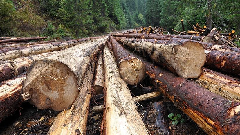Жителя Удмуртии оштрафовали за незаконную вырубку леса