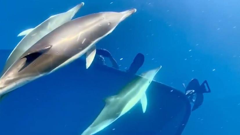 Дельфины, плавающие рядом с лодкой Гражданской гвардии Испании — видео