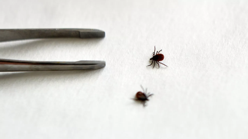 От укусов клещей пострадали более 14 тысяч жителей Прикамья