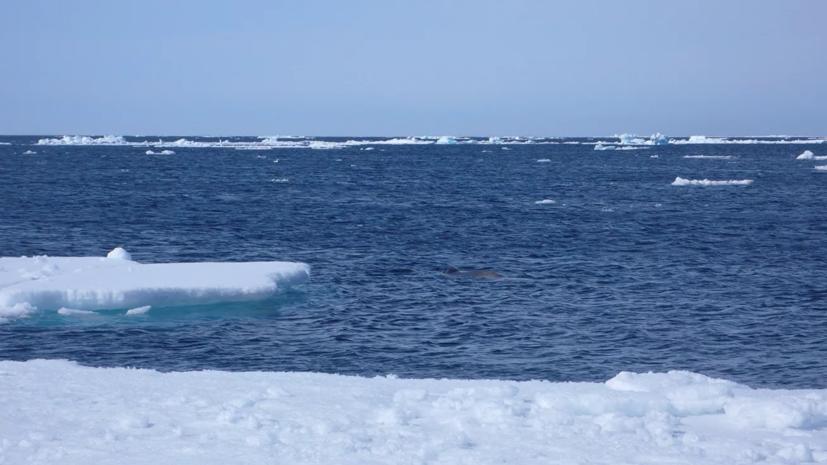 Эксперт прокомментировал развитие месторождений Арктики