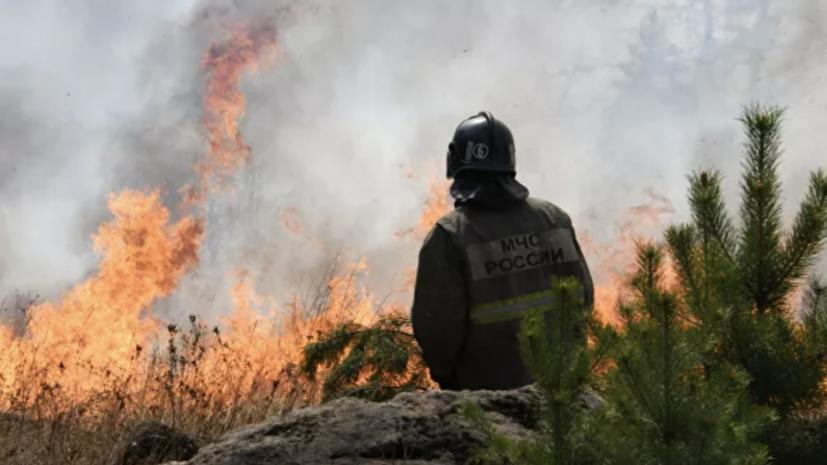 В России потушили 35 лесных пожаров за сутки