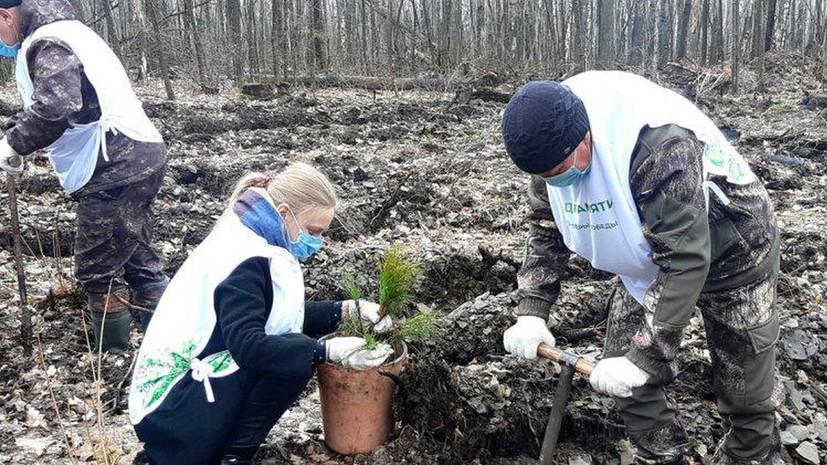 В Ульяновской области проведут акцию по сохранению леса