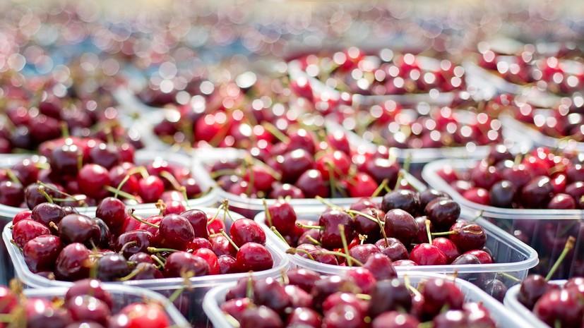 Нутрициолог оценила пользу вишни