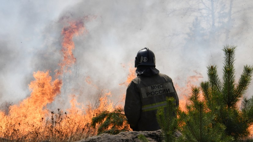 В России ликвидировали 49 лесных пожаров за сутки