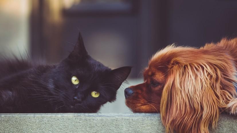 В ОНФ предложили ужесточить наказание за жестокое обращение с животными