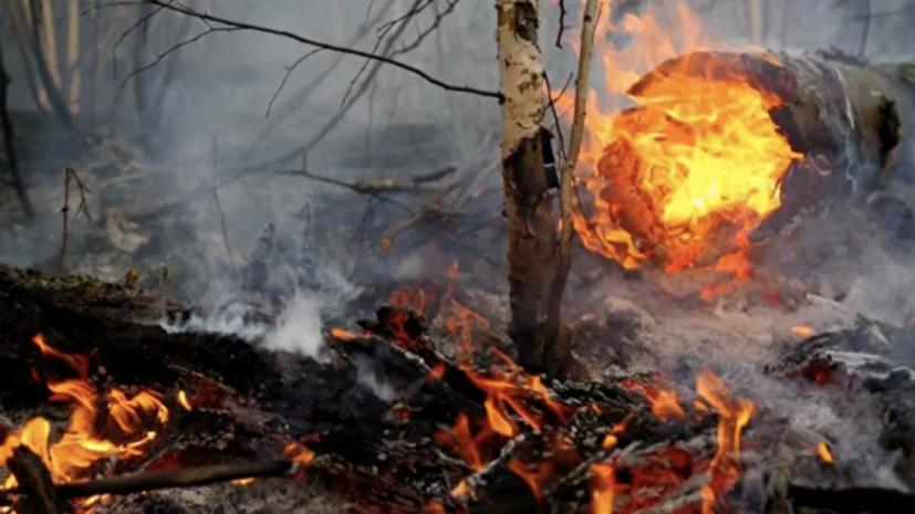 В России за сутки ликвидировали 57 лесных пожаров