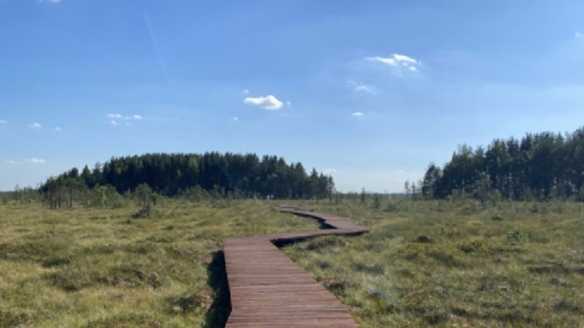 В петербургском природном заказнике появилась экотропа