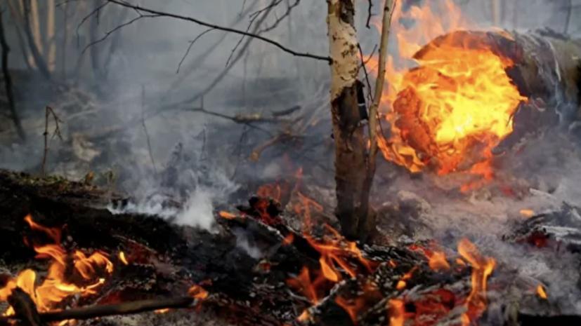 Под Анапой эвакуируют туристов из-за лесного пожара в районе Утриша