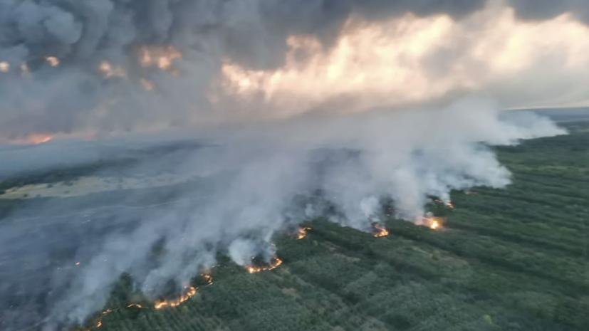 Площадь лесных пожаров в Ростовской области достигла 1000 га