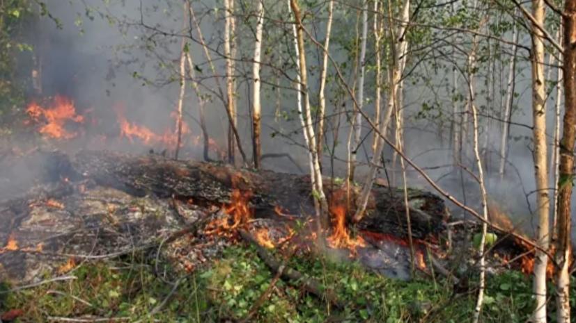 Спасатели предупредили о высокой пожароопасности в Пермском крае