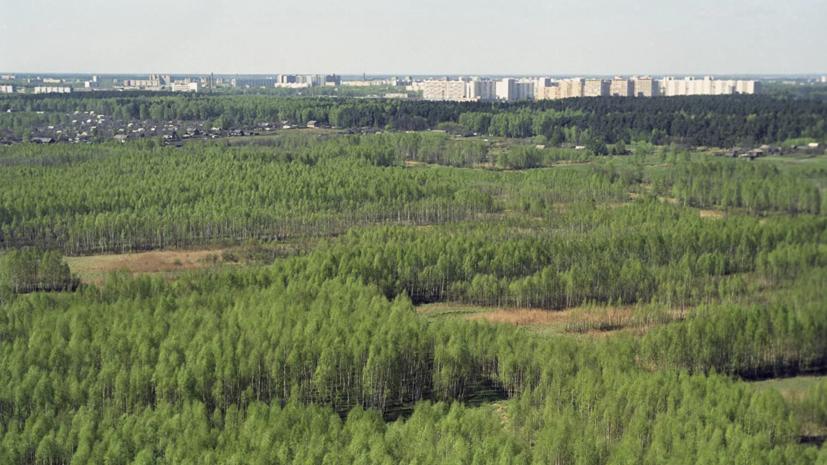В Москве поймали лося и отправили его в парк «Лосиный Остров»