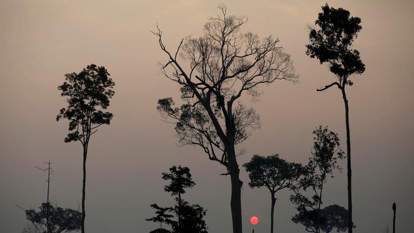INPE рассказал о ситуации с уничтожением лесов в бразильской Амазонии