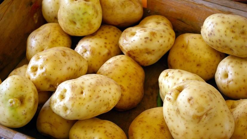 В Картофельном союзе прокомментировали ситуацию на рынке овощей
