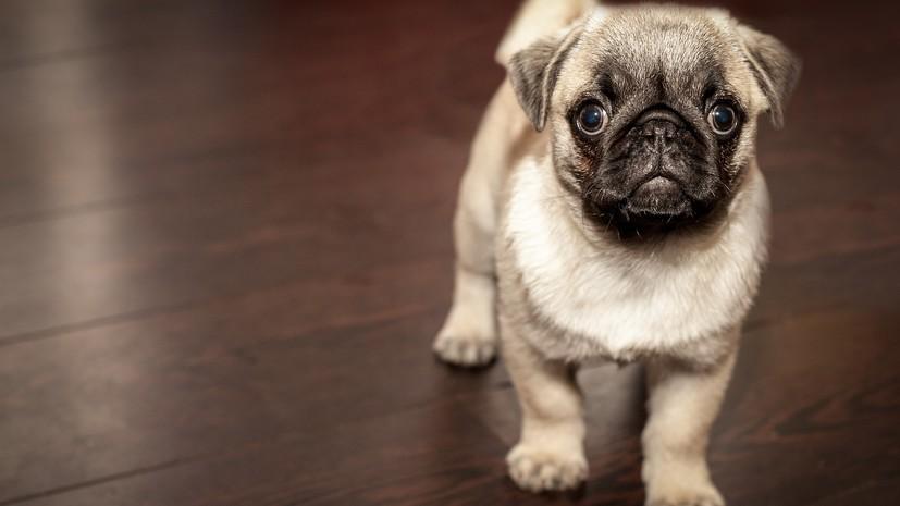 Эксперт оценил ситуацию с чипированием домашних животных в России