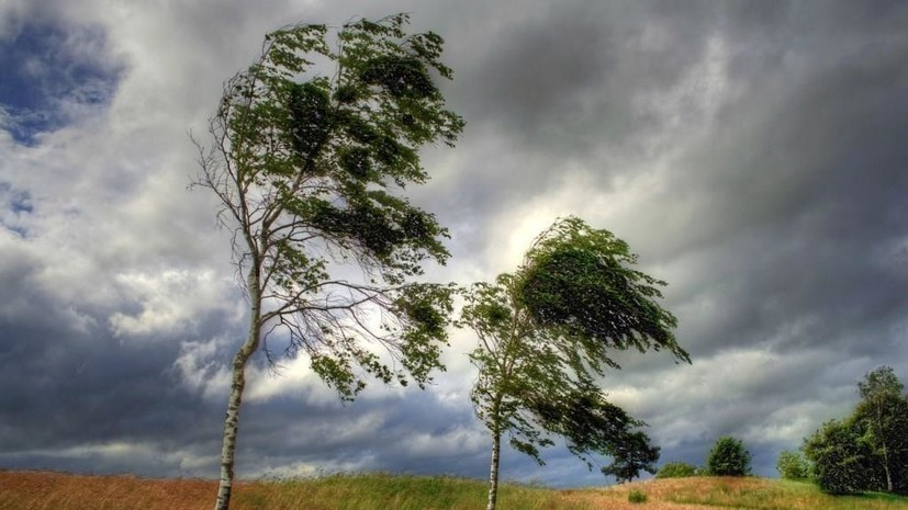 Спасатели предупредили об усилении ветра до 21 м/с в Курганской области