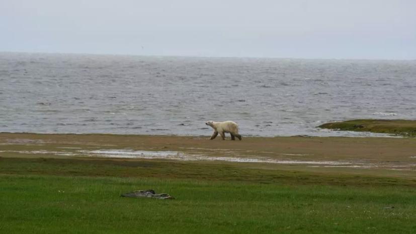 В WWF России рассказали о заповеднике «Медвежьи острова» в Якутии