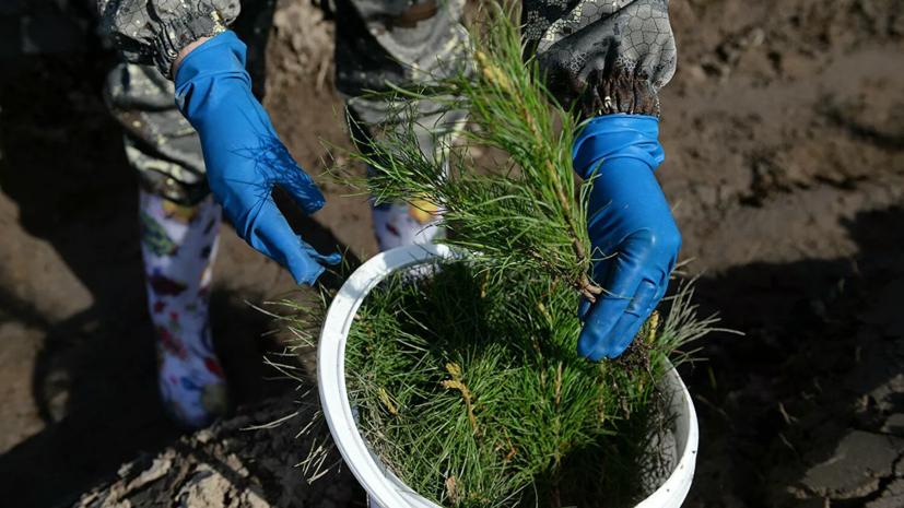 В рамках акции «Сохраним лес» высадили более 7 млн деревьев