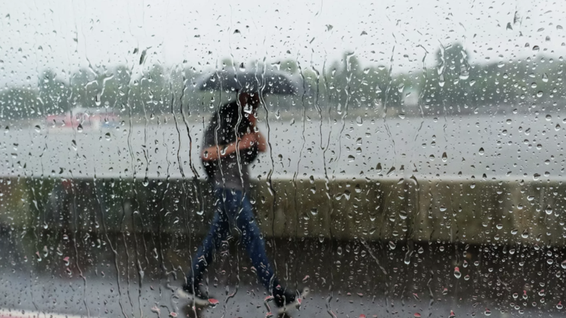 Синоптики предупредили о порывистом ветре в Москве