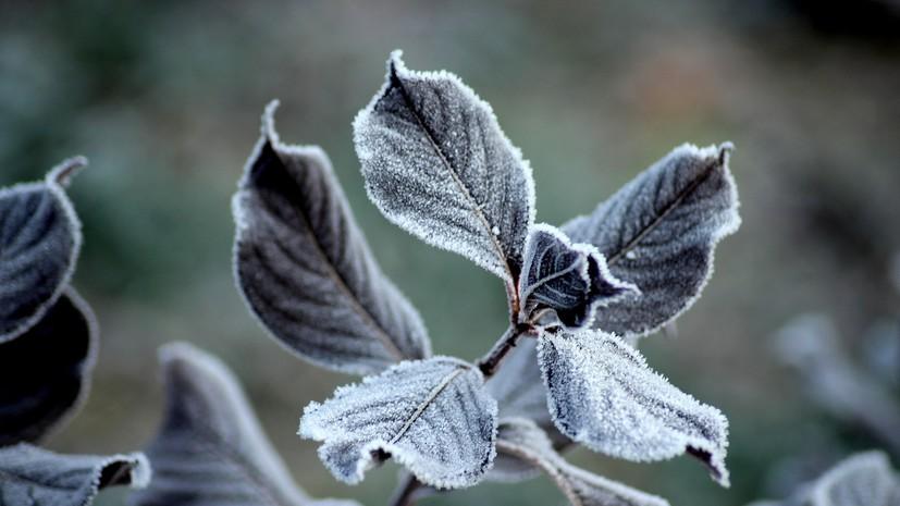 МЧС предупреждает о заморозках в Ленинградской области