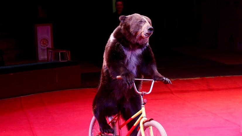 Медведь напал на дрессировщика и ребёнка в цирке в Подмосковье
