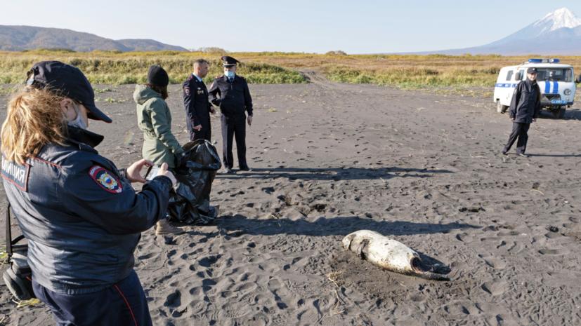 Росрыболовство возбудило дело после загрязнения океана на Камчатке
