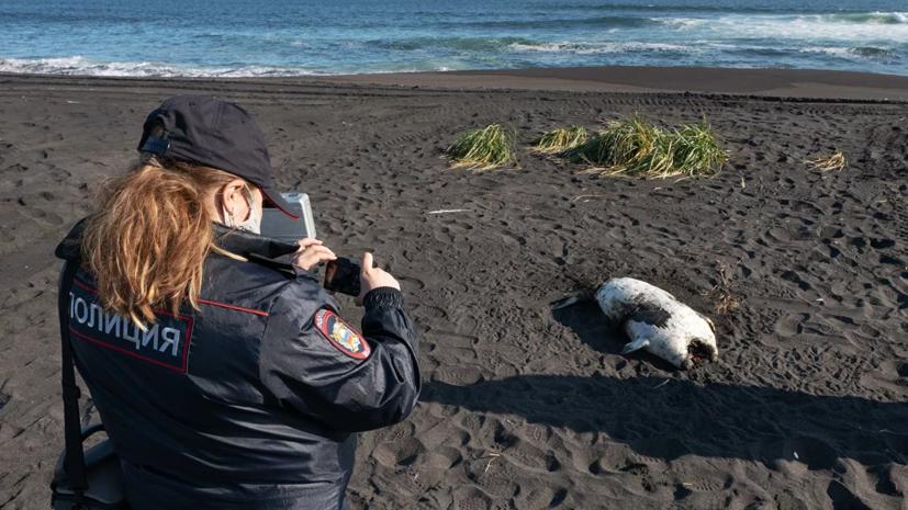 В Камчатгидромете назвали причину выброса морских животных на берег