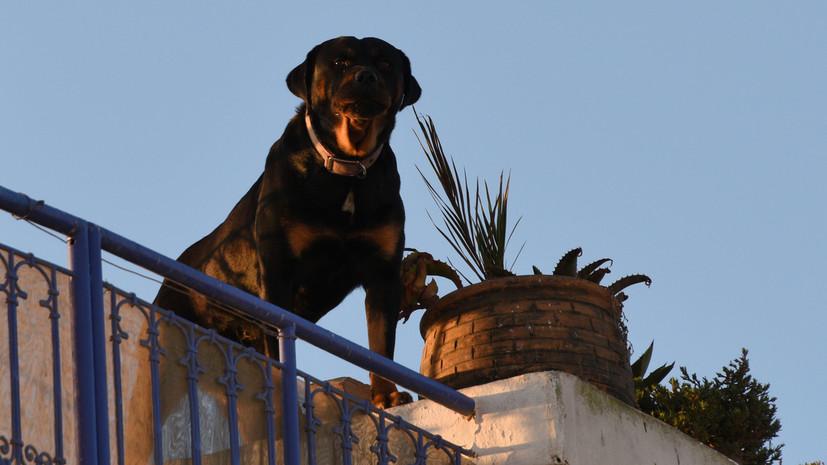 В Совфеде поддержали идею о курсах для хозяев собак крупных пород