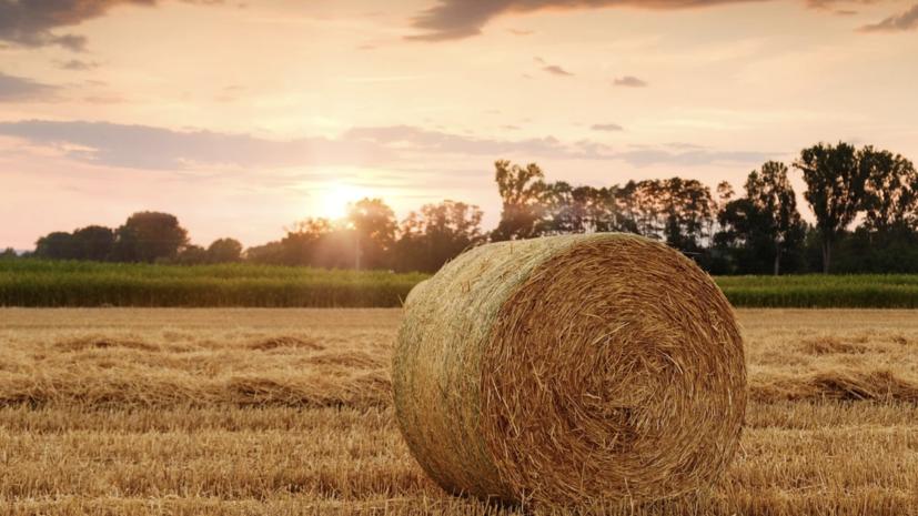 В Нижегородской области рассказали о ходе уборки урожая